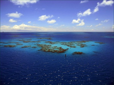 Bermuda coral reef by MFairlady